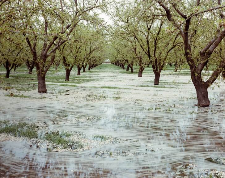 almond-tree-flood-irrigation